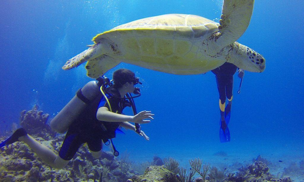 カメと泳ぐスキューバダイビング