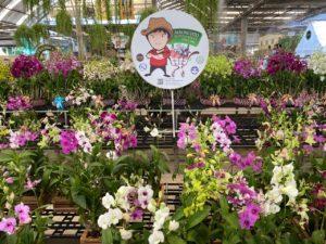 Air Orchids Supermarket & Lab