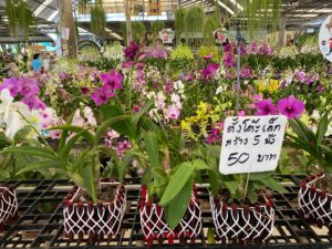 Air Orchids Supermarket / Air Orchids & Lab